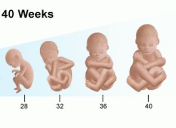 fetal_diagram_growth_whole_preg